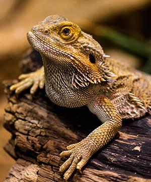 Allgemeine Informationen Reptilien