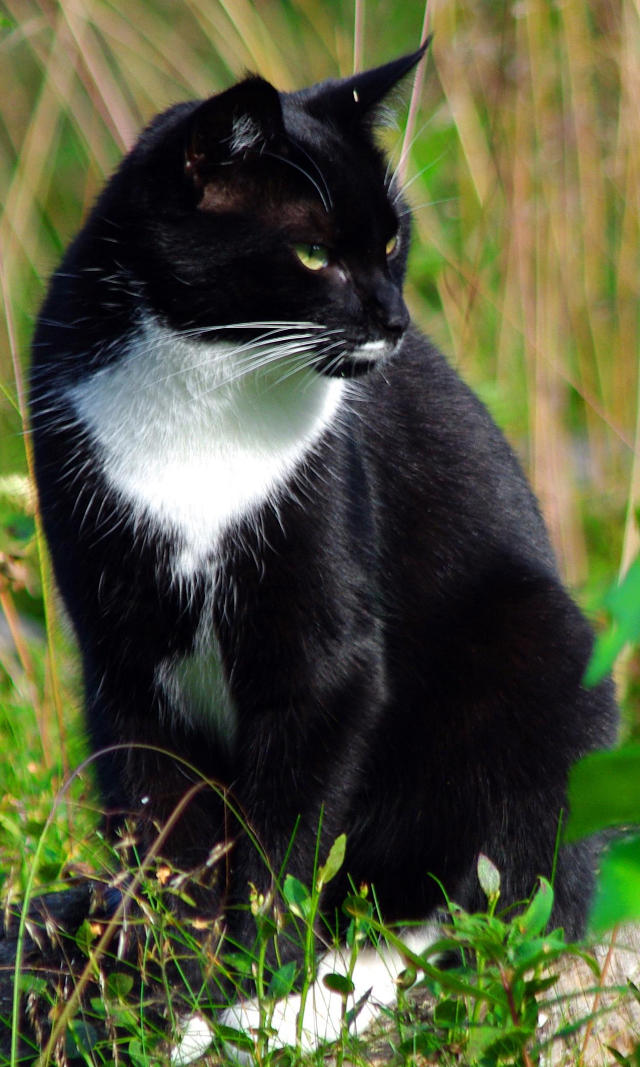 Normwerte Katze