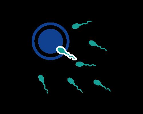 Reproduktionsmedizin