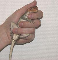 Handling Reptilien